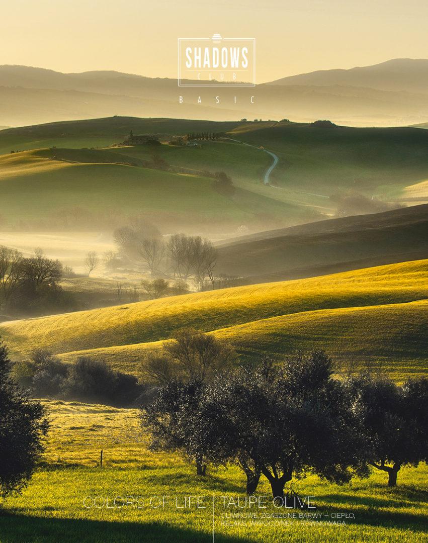 basic_taupe olive_inspiracja